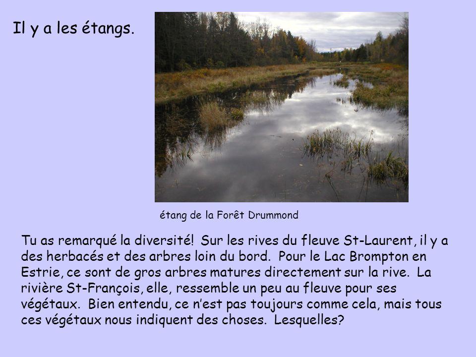 Il y a les étangs. étang de la Forêt Drummond.