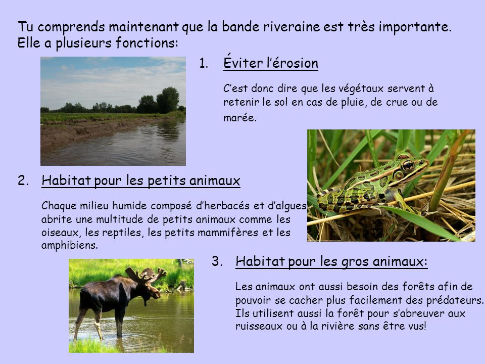 Tu comprends maintenant que la bande riveraine est très importante