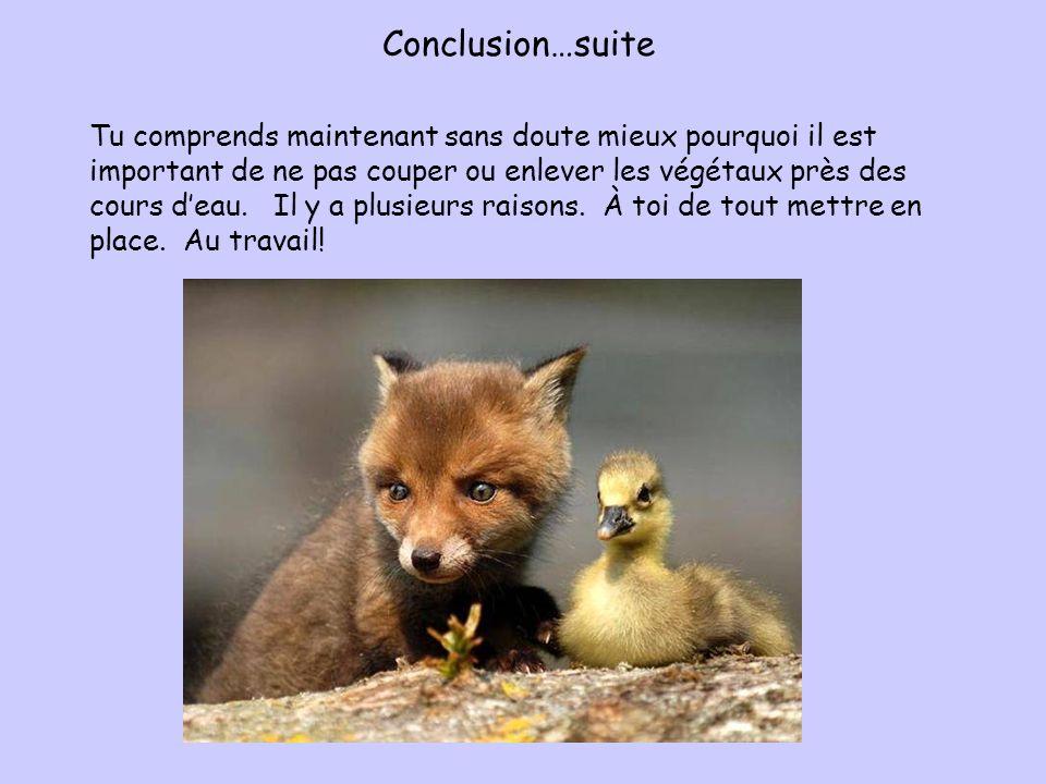 Conclusion…suite