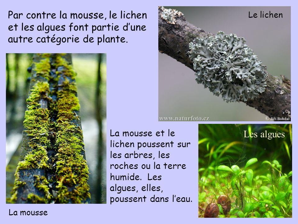 Par contre la mousse, le lichen et les algues font partie d'une autre catégorie de plante.