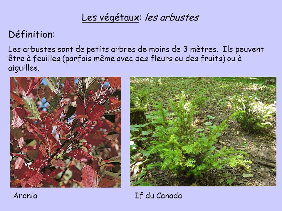 Les végétaux: les arbustes