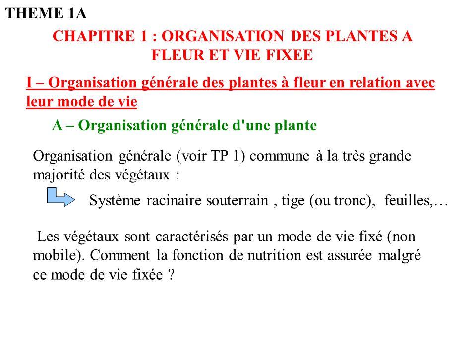 CHAPITRE 1 : ORGANISATION DES PLANTES A FLEUR ET VIE FIXEE
