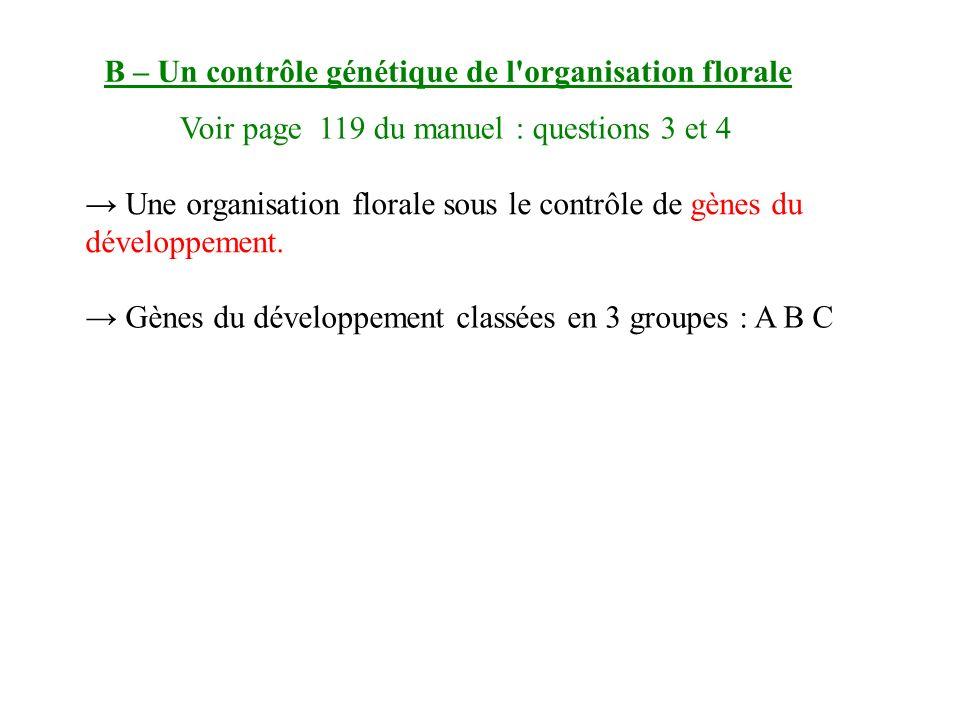 B – Un contrôle génétique de l organisation florale