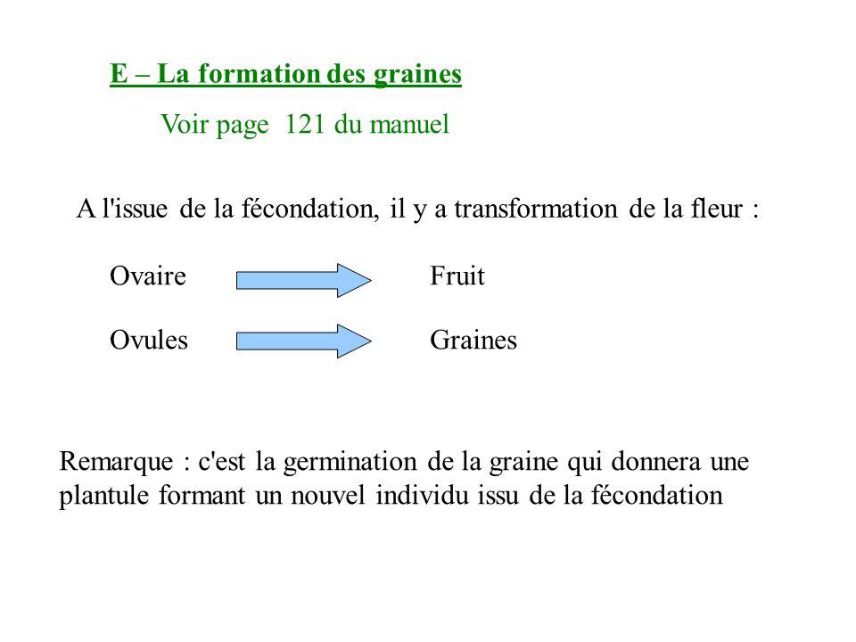 E – La formation des graines