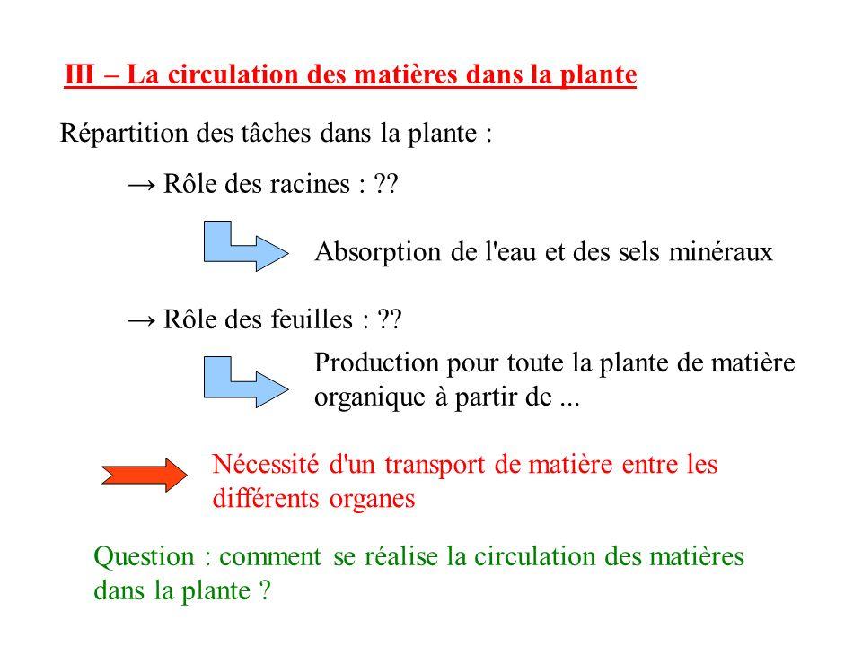 III – La circulation des matières dans la plante
