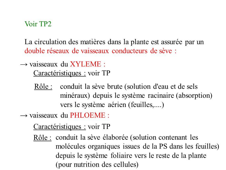 Voir TP2 La circulation des matières dans la plante est assurée par un double réseaux de vaisseaux conducteurs de sève :