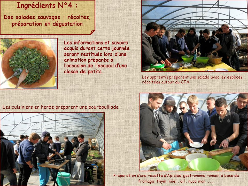 Des salades sauvages : récoltes, préparation et dégustation