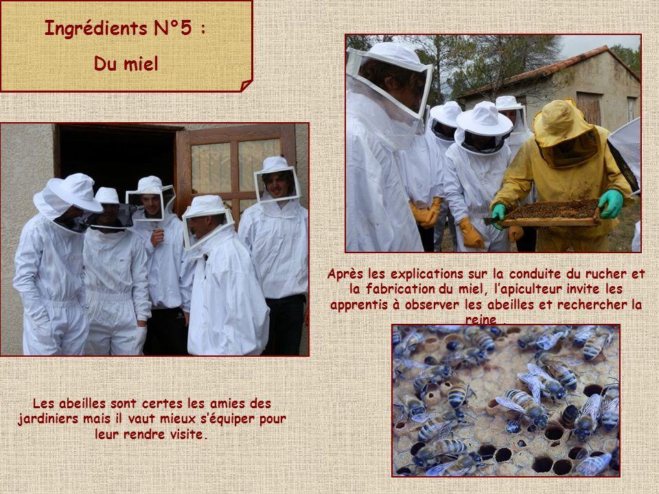 Ingrédients N°5 : Du miel