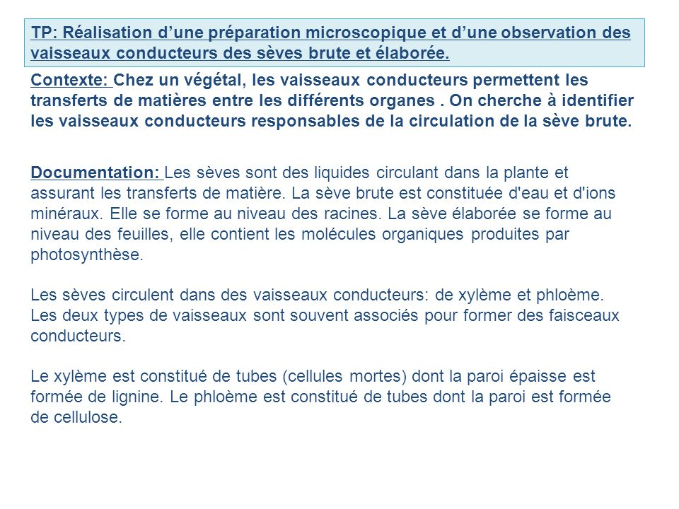 TP: Réalisation d'une préparation microscopique et d'une observation des