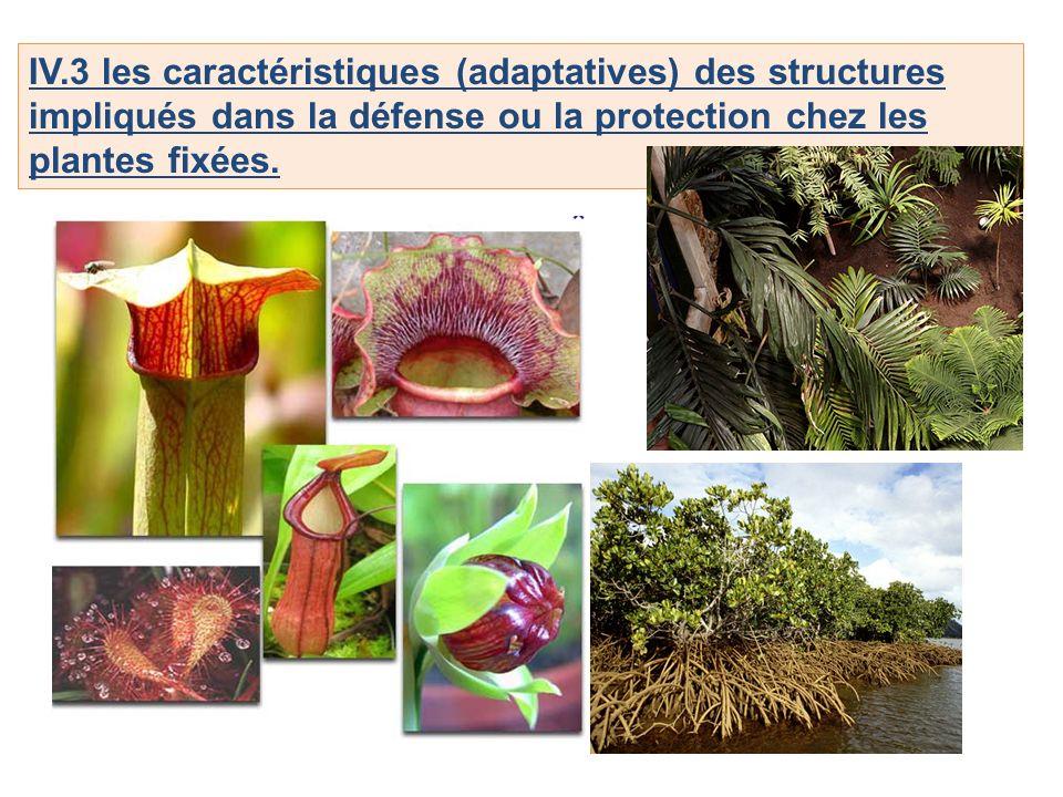 IV.3 les caractéristiques (adaptatives) des structures impliqués dans la défense ou la protection chez les plantes fixées.