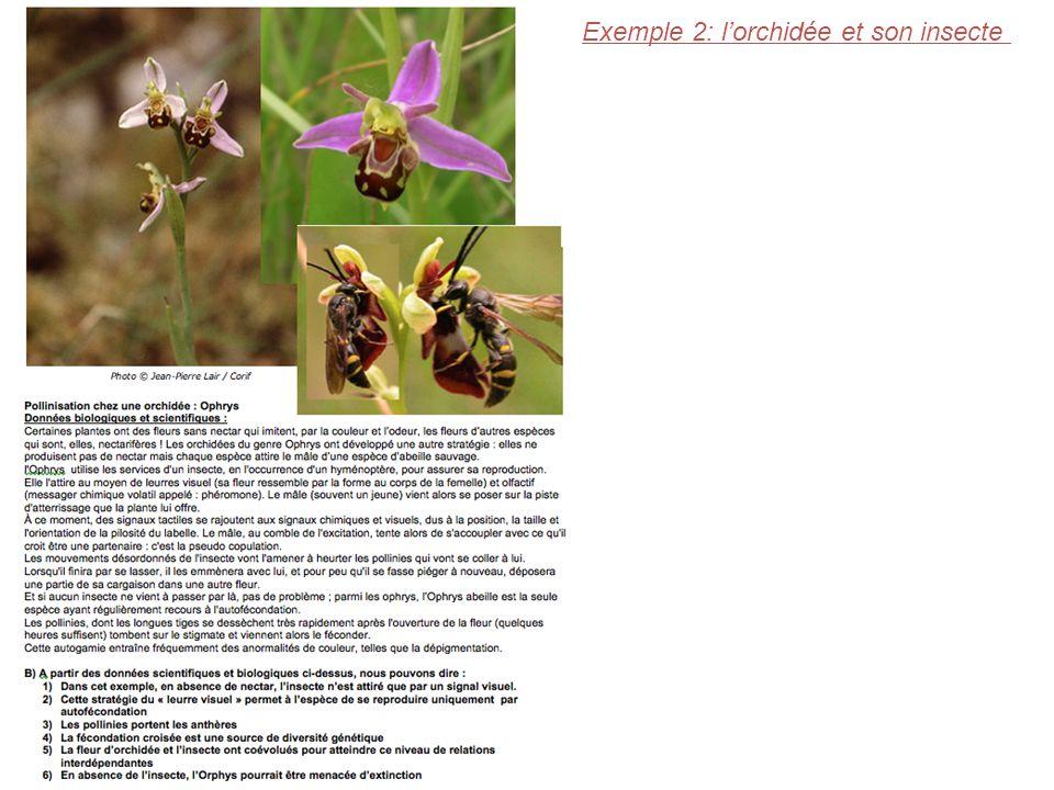 Exemple 2: l'orchidée et son insecte