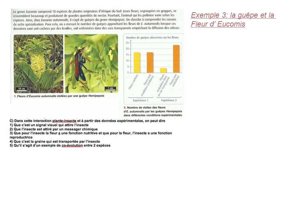 Exemple 3: la guêpe et la Fleur d' Eucomis