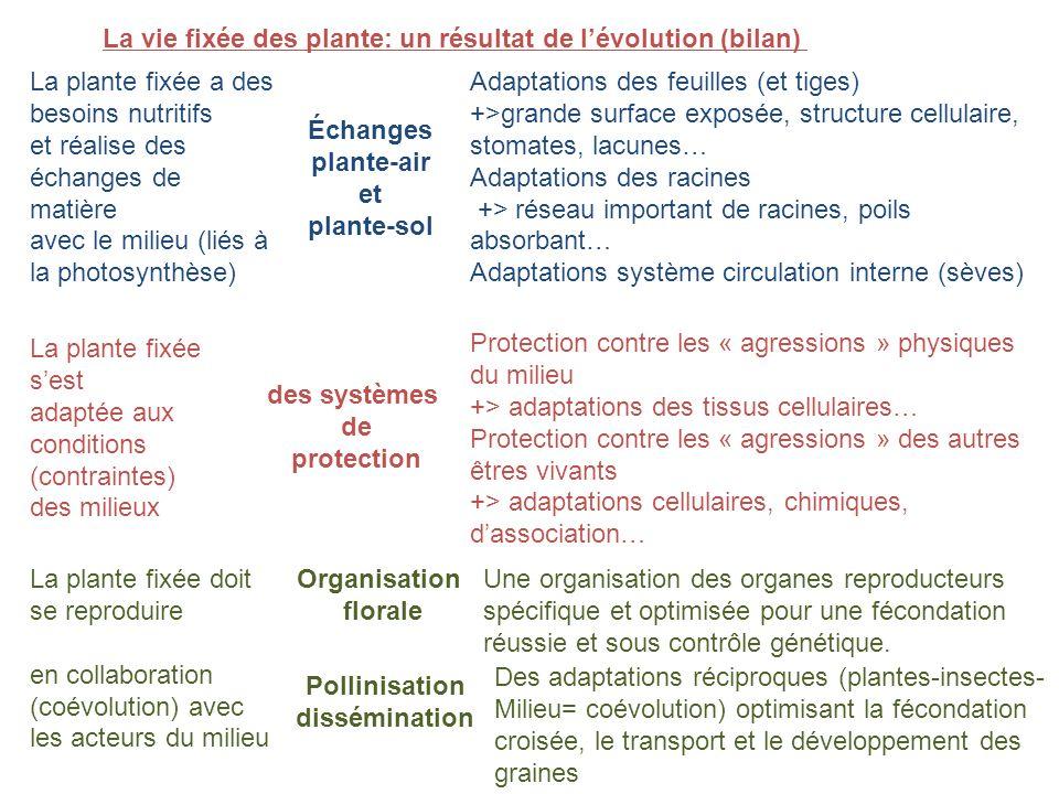 La vie fixée des plante: un résultat de l'évolution (bilan)