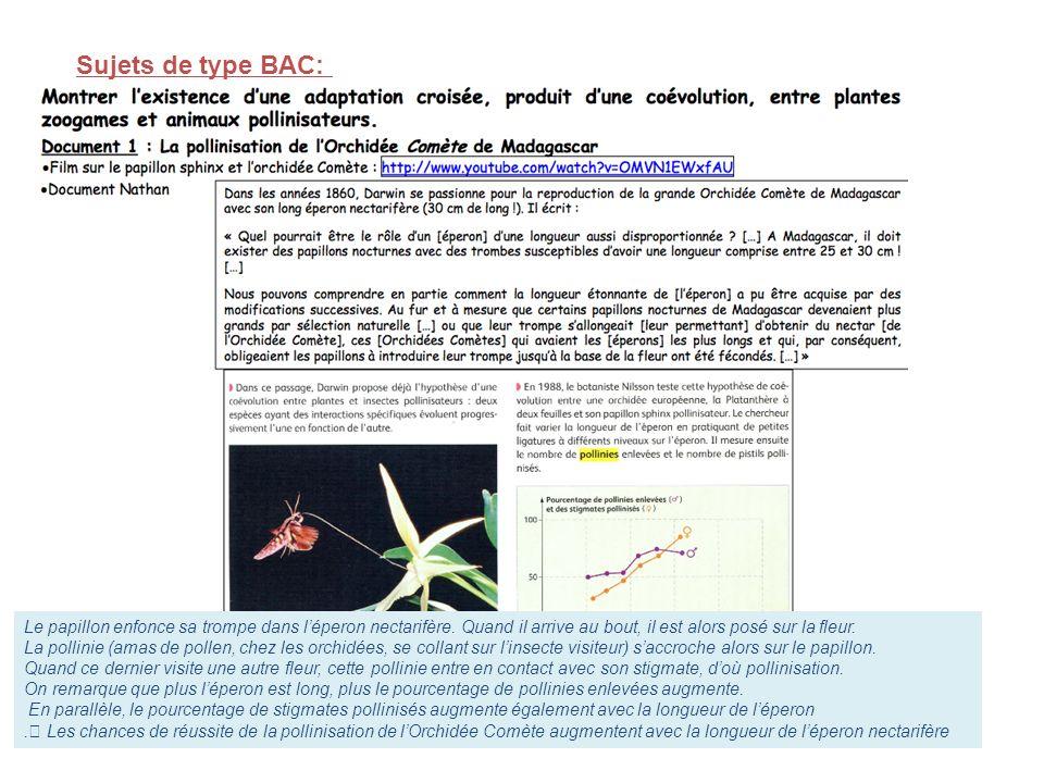 Sujets de type BAC: Le papillon enfonce sa trompe dans l'éperon nectarifère. Quand il arrive au bout, il est alors posé sur la fleur.