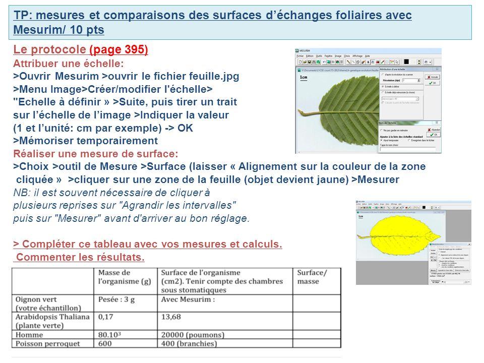 TP: mesures et comparaisons des surfaces d'échanges foliaires avec Mesurim/ 10 pts