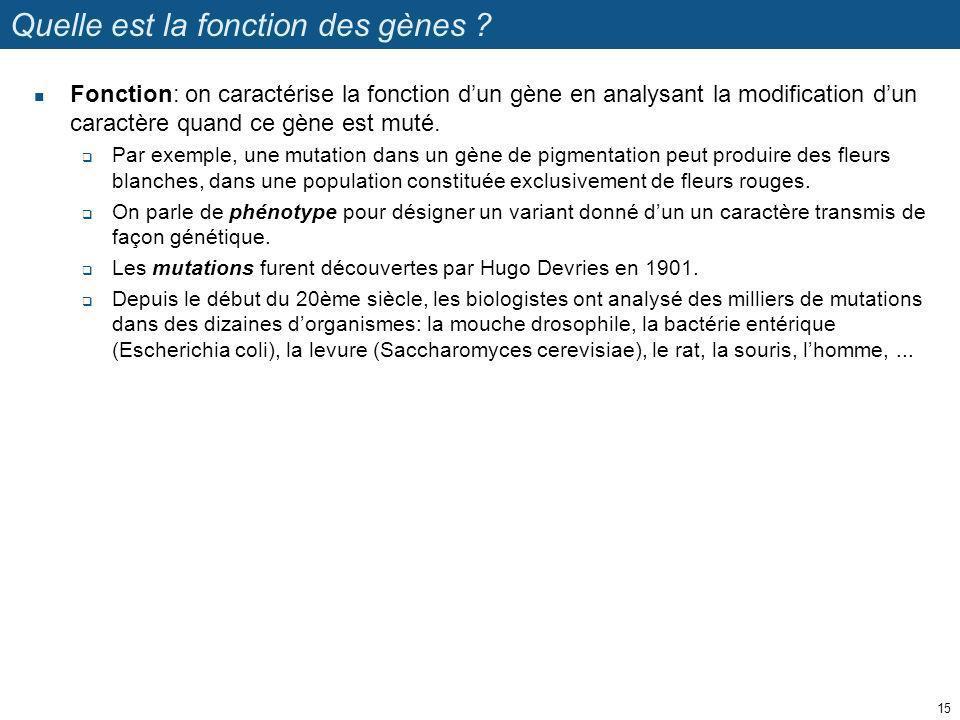 Quelle est la fonction des gènes