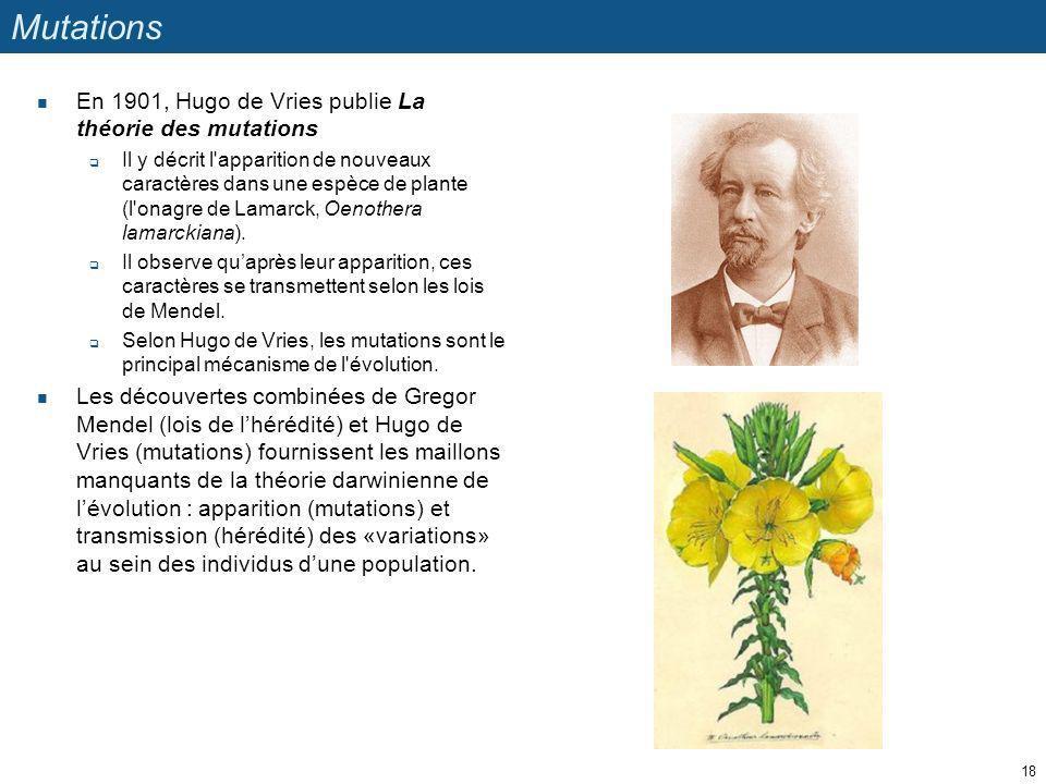 Mutations En 1901, Hugo de Vries publie La théorie des mutations