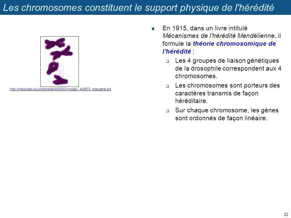 Les chromosomes constituent le support physique de l hérédité