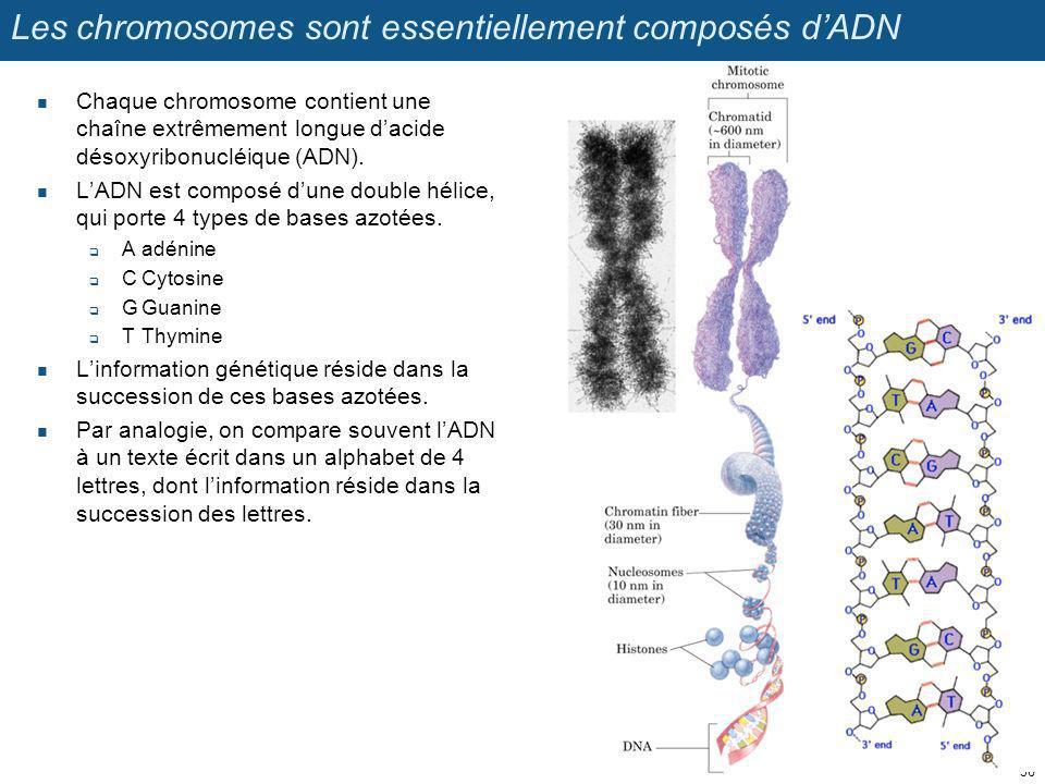Les chromosomes sont essentiellement composés d'ADN