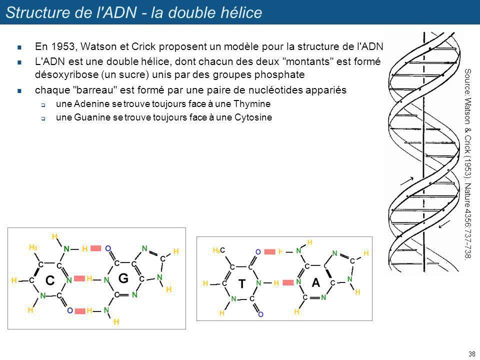 Structure de l ADN - la double hélice