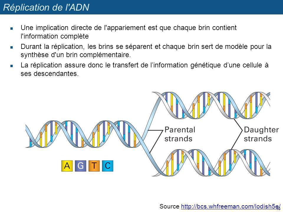 Réplication de l ADN Une implication directe de l appariement est que chaque brin contient l information complète.