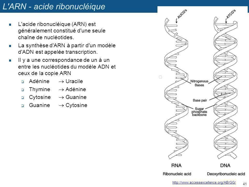 L ARN - acide ribonucléique