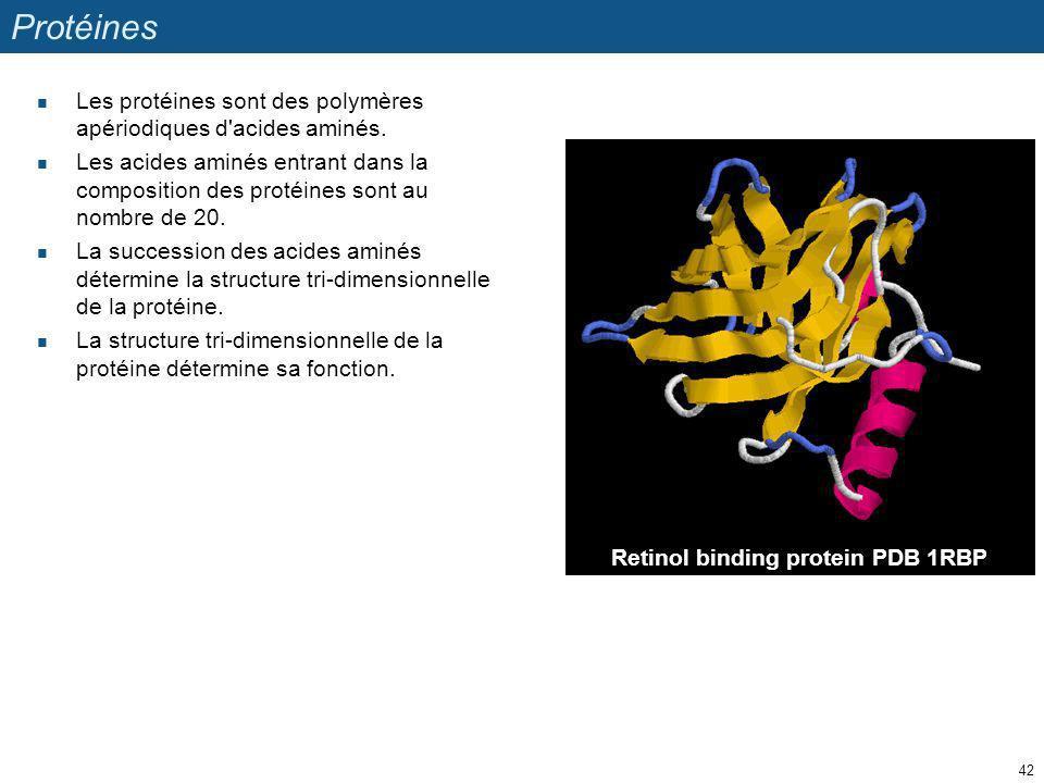 Protéines Les protéines sont des polymères apériodiques d acides aminés.