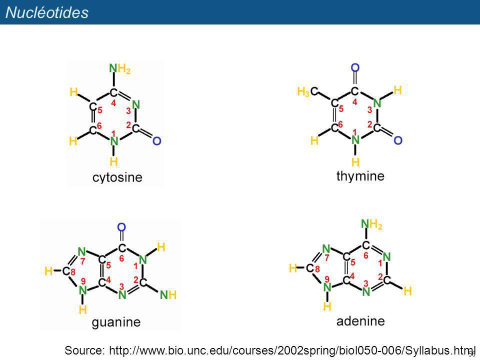 Nucléotides Source: http://www.bio.unc.edu/courses/2002spring/biol050-006/Syllabus.html