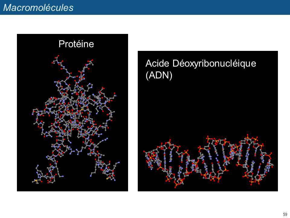 Macromolécules Protéine Acide Déoxyribonucléique (ADN)