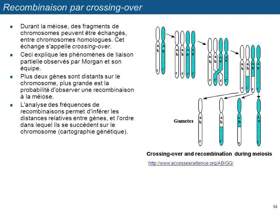 Recombinaison par crossing-over