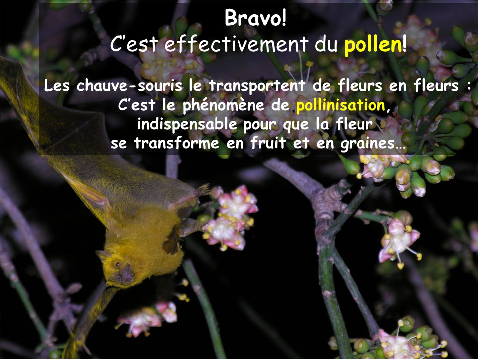 C'est effectivement du pollen!
