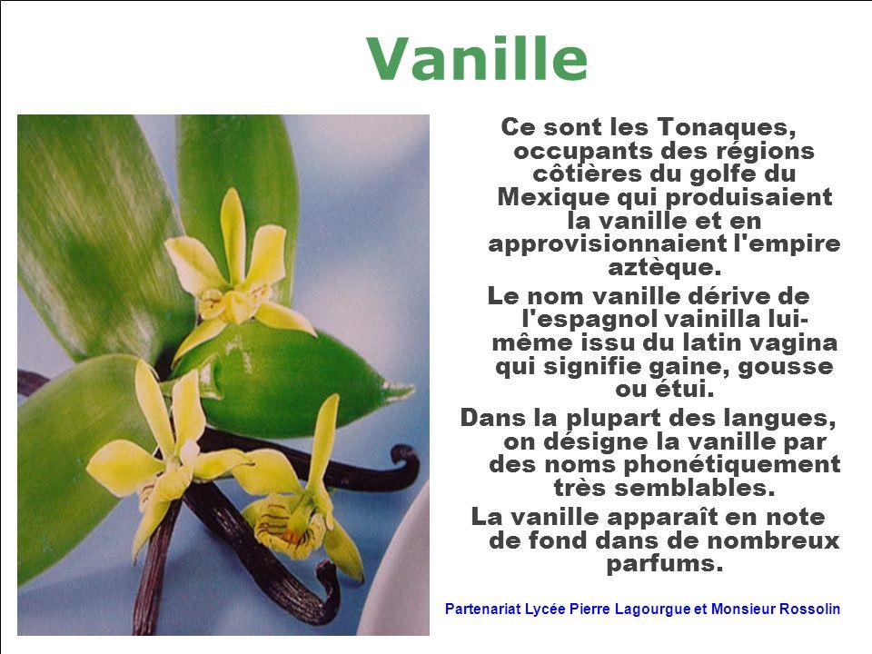 La vanille apparaît en note de fond dans de nombreux parfums.