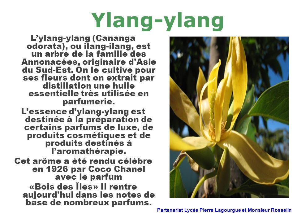 Cet arôme a été rendu célèbre en 1926 par Coco Chanel avec le parfum