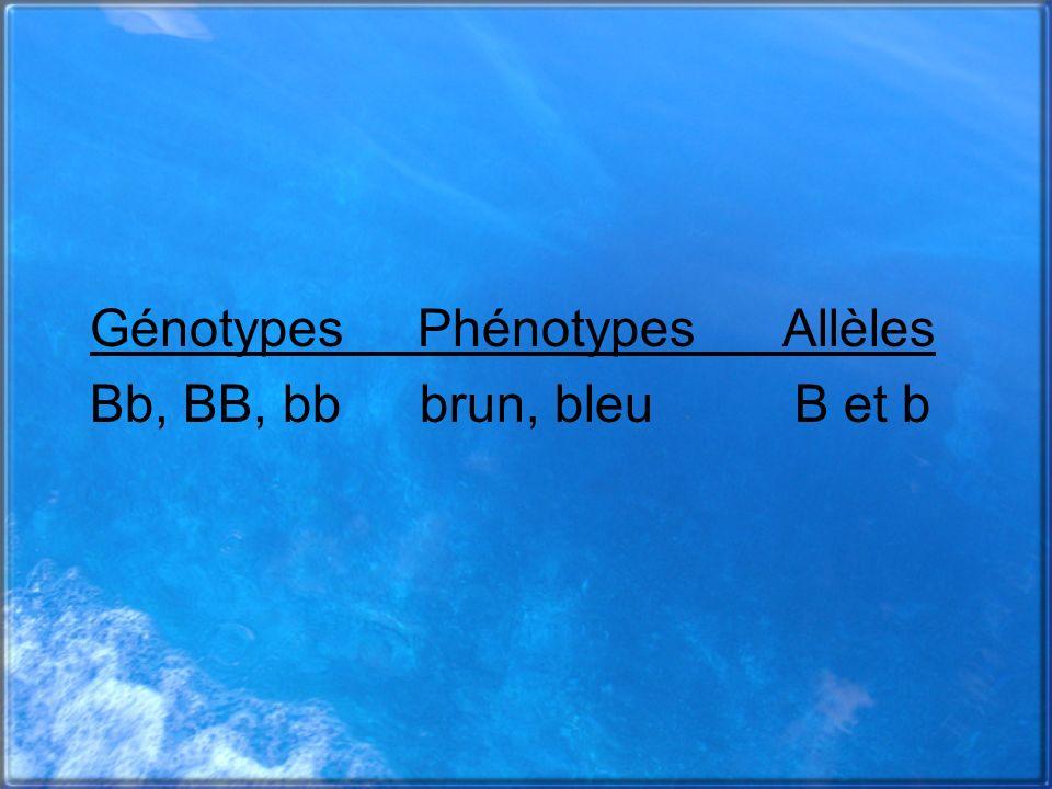 Génotypes Phénotypes Allèles