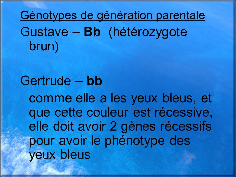 Gustave – Bb (hétérozygote brun)