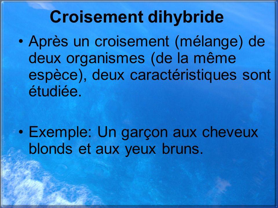 Croisement dihybride Après un croisement (mélange) de deux organismes (de la même espèce), deux caractéristiques sont étudiée.