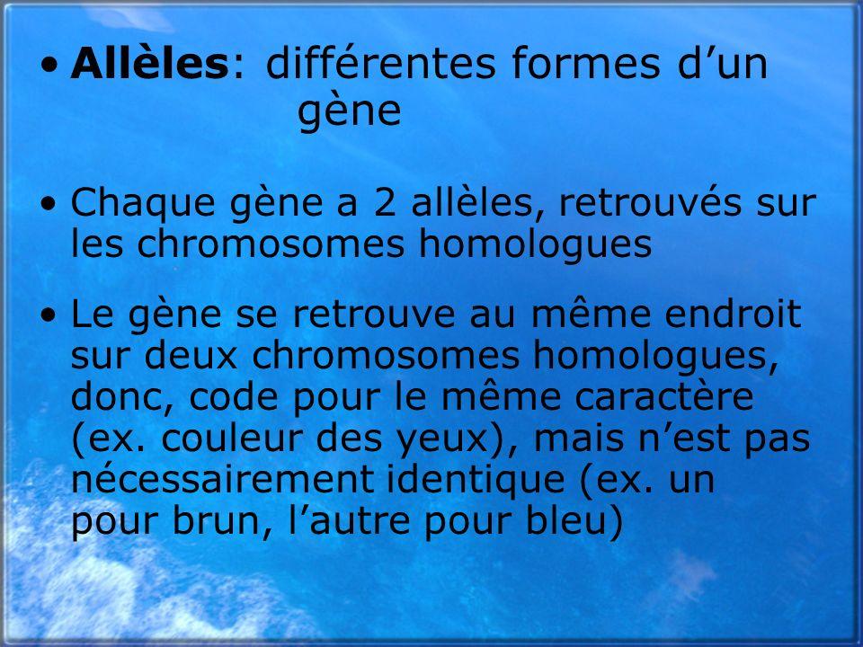 Allèles: différentes formes d'un gène