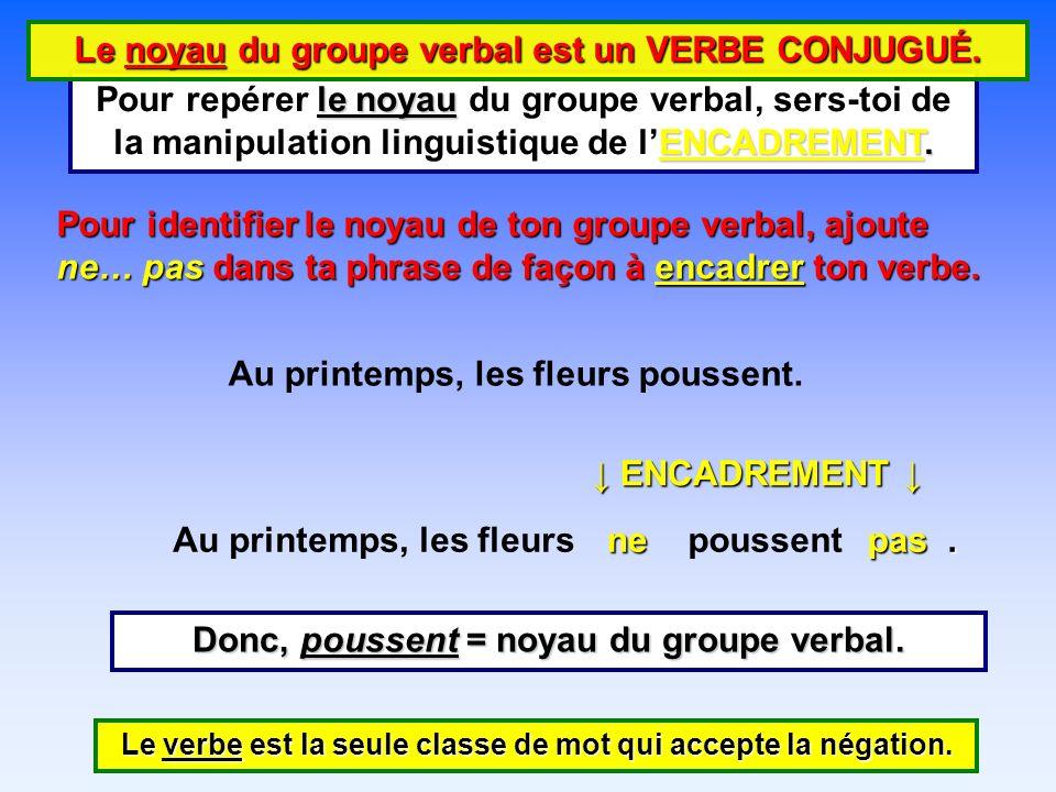 Le noyau du groupe verbal est un VERBE CONJUGUÉ.