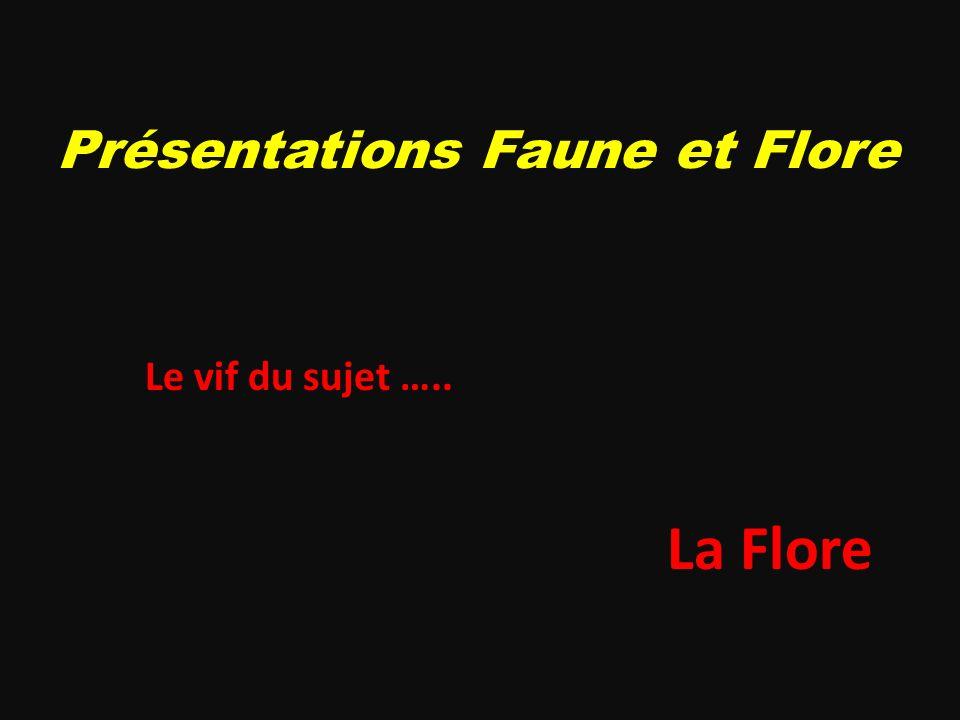 Présentations Faune et Flore