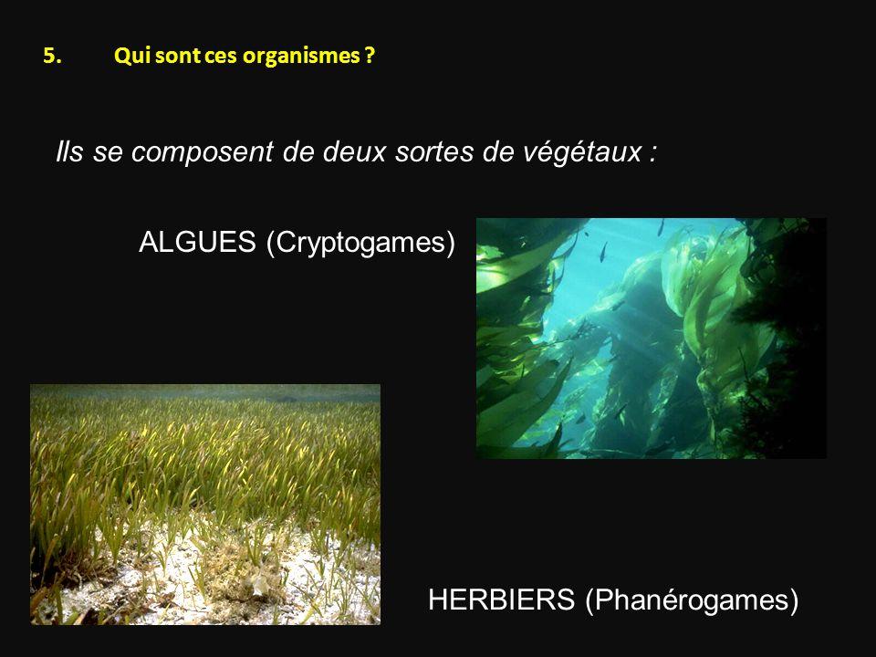 Qui sont ces organismes