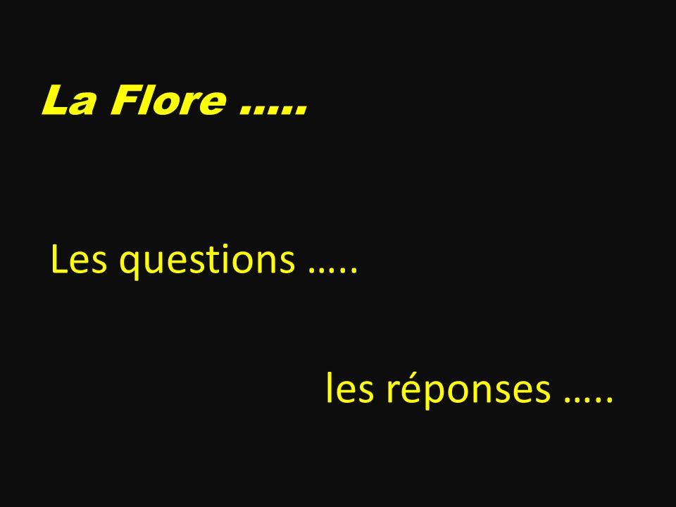 Les questions ….. les réponses …..
