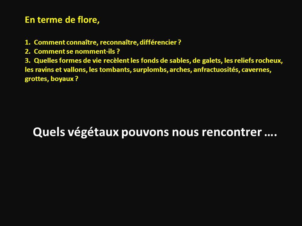 En terme de flore, 1. Comment connaître, reconnaître, différencier. 2