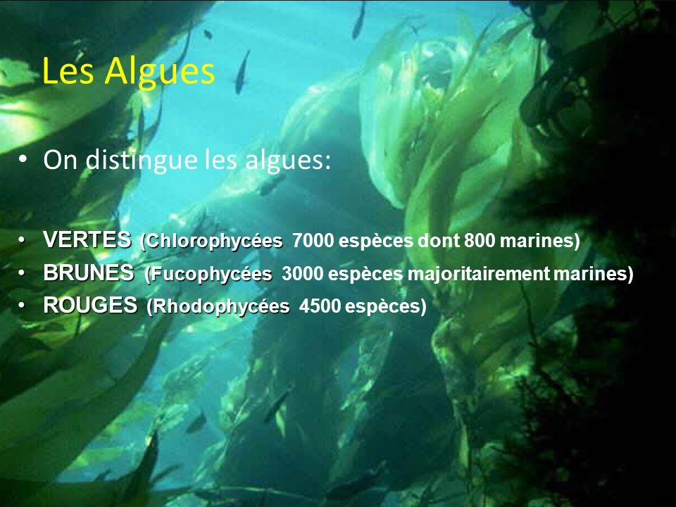 Les Algues On distingue les algues: