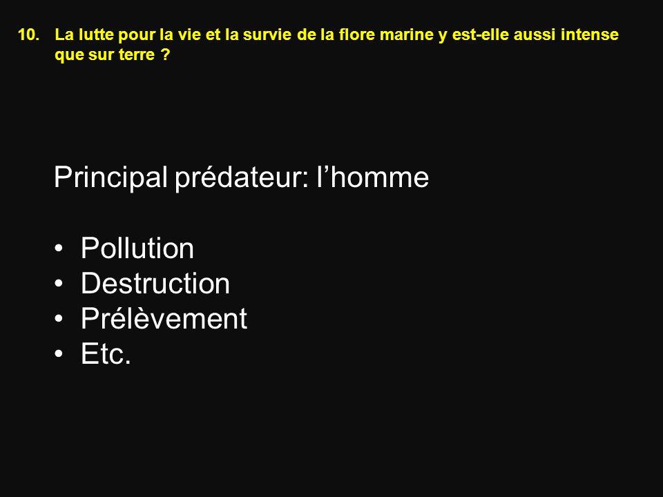 Principal prédateur: l'homme Pollution Destruction Prélèvement Etc.
