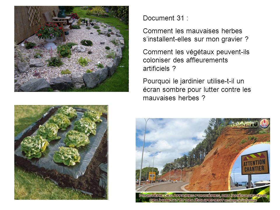 Document 31 : Comment les mauvaises herbes s'installent-elles sur mon gravier
