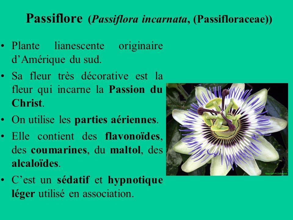 Passiflore (Passiflora incarnata, (Passifloraceae))
