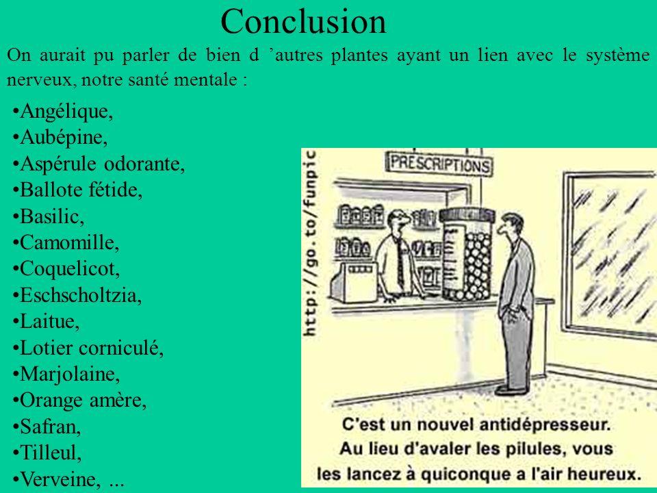 Conclusion Angélique, Aubépine, Aspérule odorante, Ballote fétide,