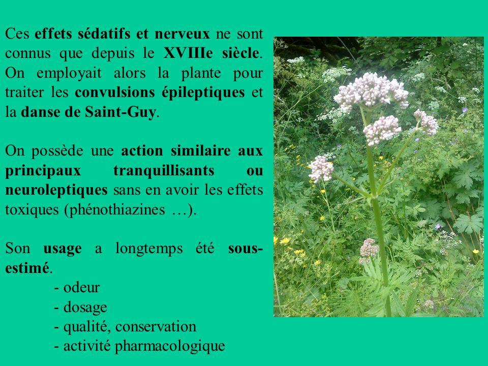Ces effets sédatifs et nerveux ne sont connus que depuis le XVIIIe siècle. On employait alors la plante pour traiter les convulsions épileptiques et la danse de Saint-Guy.