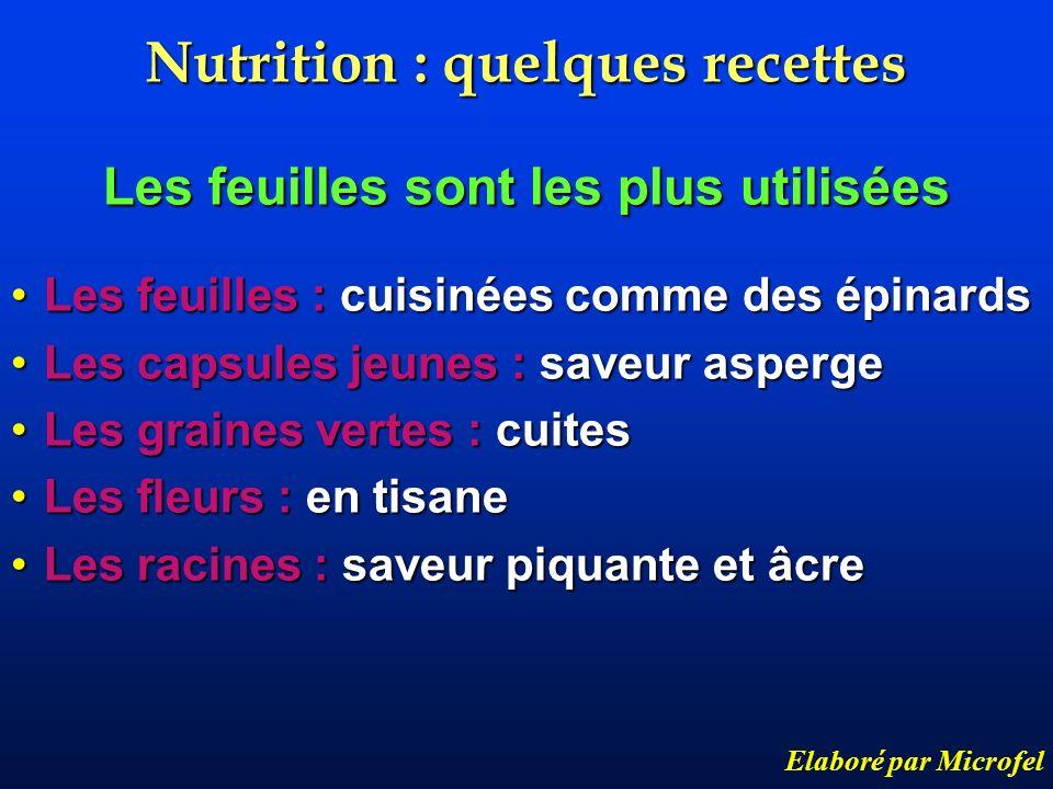 Nutrition : quelques recettes