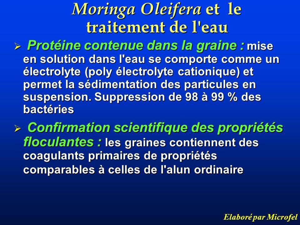 Moringa Oleifera et le traitement de l eau